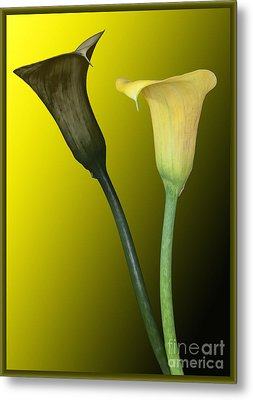 Cala Lilies Opposites Metal Print by Shirley Mangini