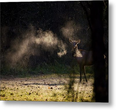 Metal Print featuring the photograph Calf Elk In December by Michael Dougherty