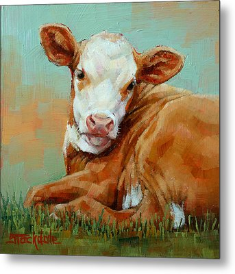 Calf Resting Metal Print by Margaret Stockdale