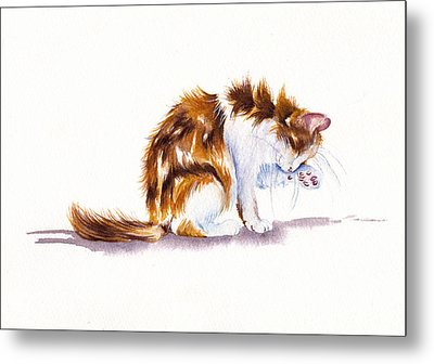 Calico Cat Washing Metal Print