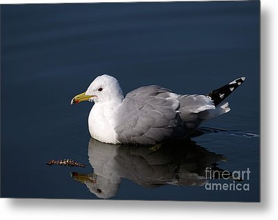 Metal Print featuring the photograph California Gull by Sharon Talson
