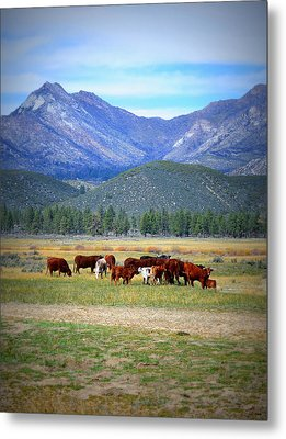 Metal Print featuring the photograph California Pastures by Glenn McCarthy Art and Photography