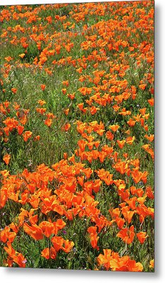 Metal Print featuring the mixed media California Poppies- Art By Linda Woods by Linda Woods