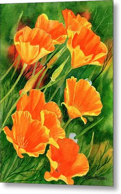 California Poppies Faces Up Metal Print