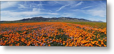 Metal Print featuring the photograph California Poppies by Gary Cloud