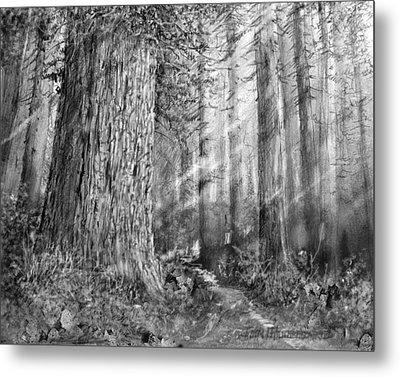 California Redwood Enchanced Metal Print by Jim Hubbard