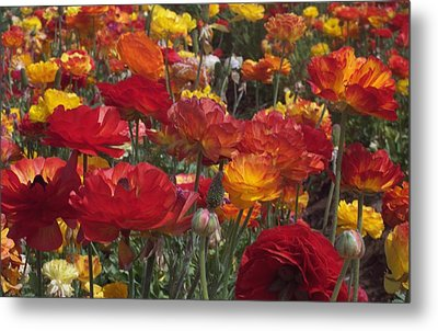 California Riches Metal Print by Jean Booth