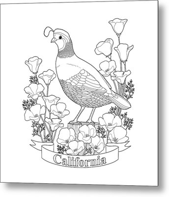 California State Bird And Flower Coloring Page Metal Print