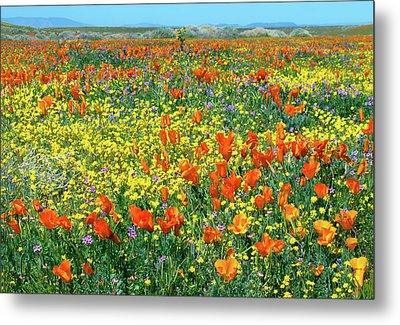 Metal Print featuring the photograph California Wildflower Super Bloom by Ram Vasudev