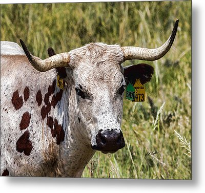 Metal Print featuring the photograph Call Me Spot by Bill Kesler