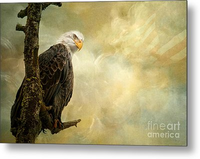 Call Of Honor Metal Print by Beve Brown-Clark Photography