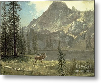 Call Of The Wild Metal Print by Albert Bierstadt