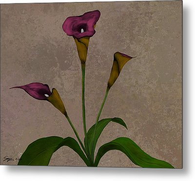 Calla Lilies Metal Print by Steven Powers SMP