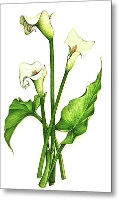 Metal Print featuring the painting Calla Lilly by Heidi Kriel