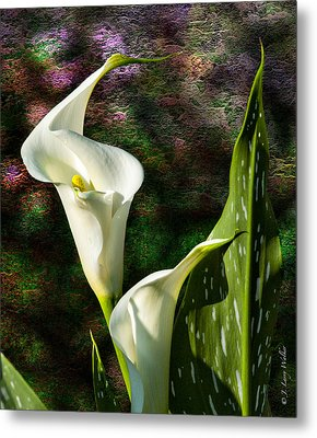 Calla Lily - P. Bright Metal Print by J Larry Walker