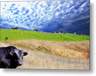 Calm Before The Storm Metal Print by Wingsdomain Art and Photography