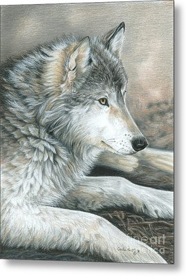 Calm Wolf Metal Print