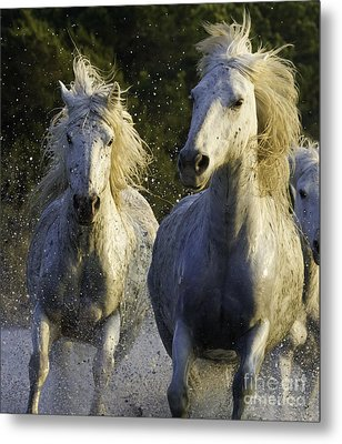 Camargue Spray Metal Print by Carol Walker
