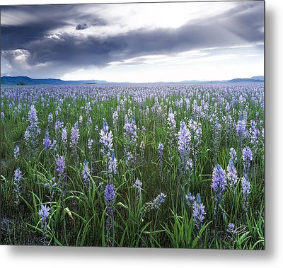 Camas Marsh 2 Metal Print by Leland D Howard