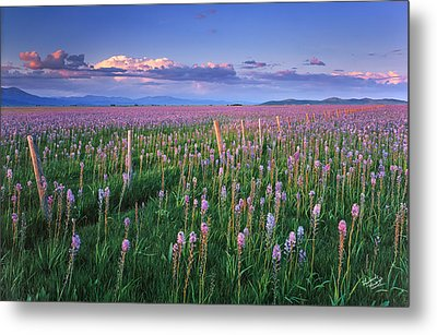 Camas Prairie Metal Print by Leland D Howard