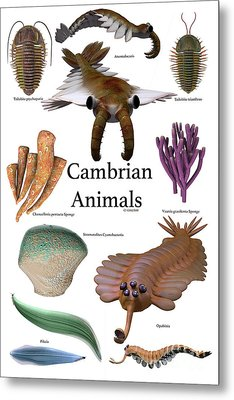 Cambrian Animals Metal Print by Corey Ford