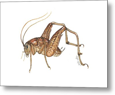 Camel Cricket Metal Print by Cindy Hitchcock