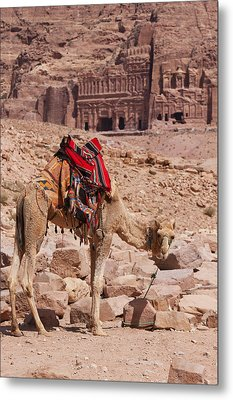 Camel In Front Of The Royal Tombs In Petra Metal Print by Martin Child