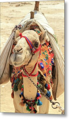 Metal Print featuring the photograph Camel by Silvia Bruno