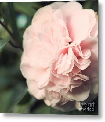 Camellia Metal Print by Cindy Garber Iverson