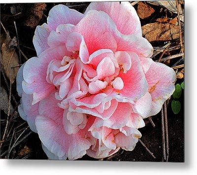 Camellia Flower Metal Print by Susanne Van Hulst
