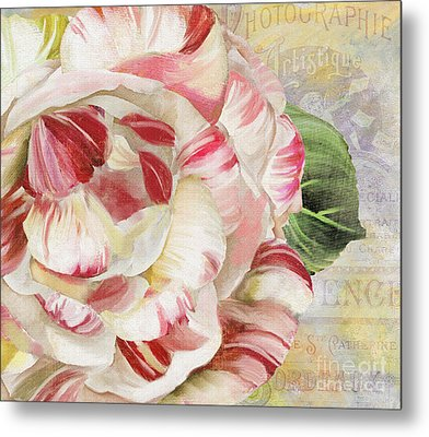 Camellia Metal Print by Mindy Sommers