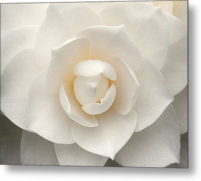Camellia Perfection Metal Print