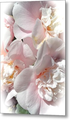 Camellias Softly Metal Print by Michele Myers