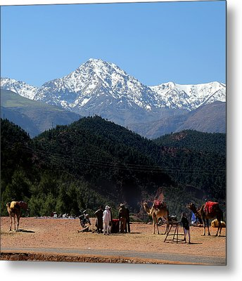 Metal Print featuring the photograph Camels 1 by Andrew Fare