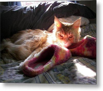 Cameo And Sunbeams Metal Print by Judy Via-Wolff