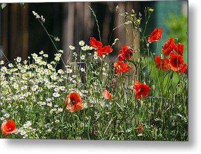 Camille And Poppies Metal Print by Rainer Kersten