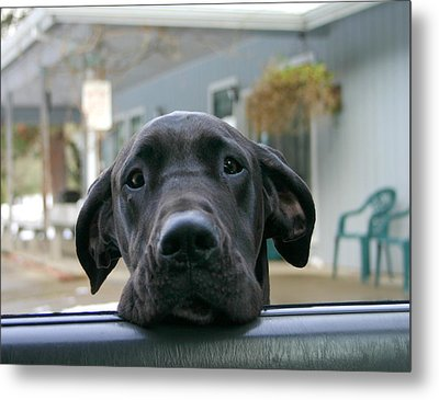 Can I Come In Metal Print by Marie Neder