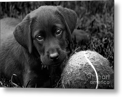 Can We Play  Metal Print by Cathy  Beharriell