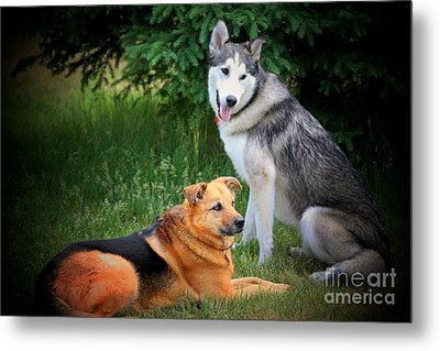 Can We Play Now Metal Print by Marjorie Imbeau