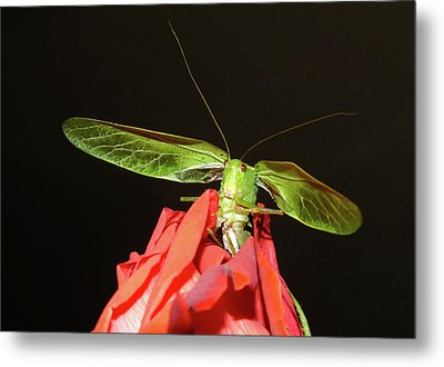 Can You Hear Me Now By Karen Wiles Metal Print