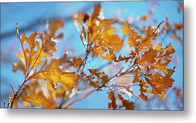 Can You Paint With All The Colors Of The Wind? Metal Print