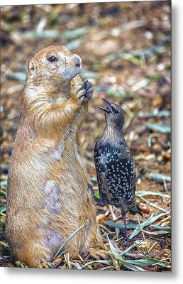 Can You Spare A Nut? Metal Print