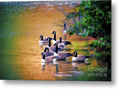 Metal Print featuring the photograph Canada Geese - Autumn At Pandapas Pond by Kerri Farley