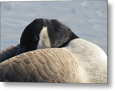 Canada Goose Head Metal Print by Mary Mikawoz