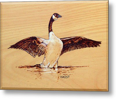 Canada Goose Metal Print by Ron Haist