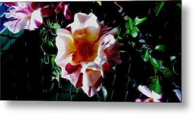 'candy Land' Rose In Abstract Metal Print
