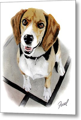 Canine Cutie Metal Print by Ferrel Cordle