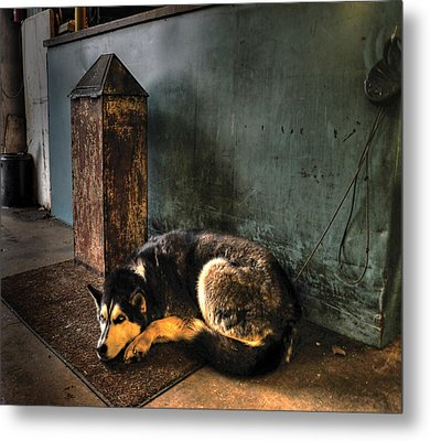 Canine Sentry Metal Print by Don Wolf