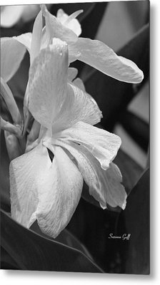 Cannas Amarillo In Black And White Metal Print
