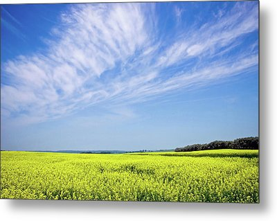 Canola Blue Metal Print by Keith Armstrong